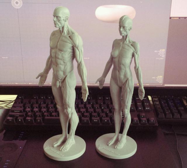人体模型買ってみた