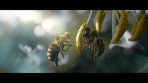 Vittel Biodiversité - Bee