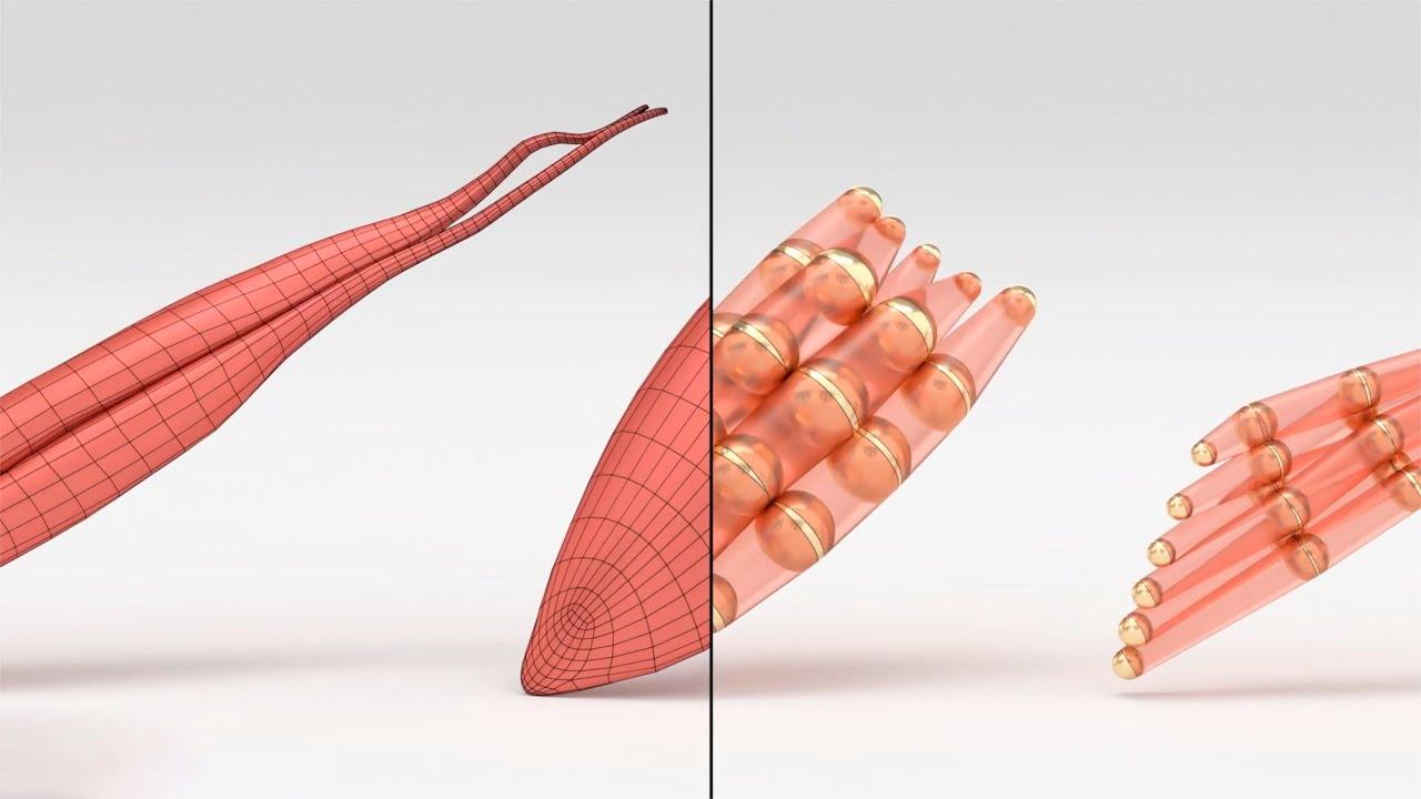リアルタイム筋肉シミュレーション